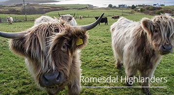 home-side-romesdal-hghlanders