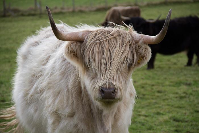 romesdal-highlanders-home-3